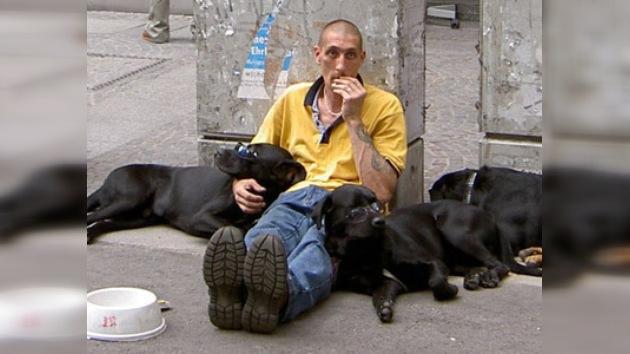 Cachorros para ingresos