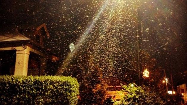 Video: Una plaga 'bíblica' de decenas de miles de termitas invade el sur de EE.UU.