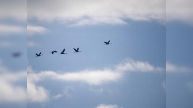 El cambio climático afecta a las aves migratorias