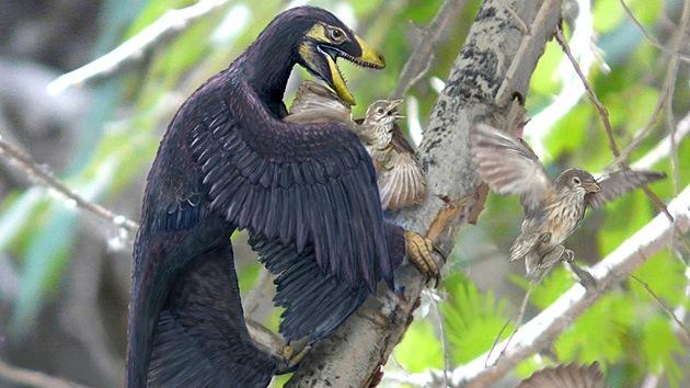 Los dinosaurios redujeron su tamaño durante 50 millones de años para convertirse en aves
