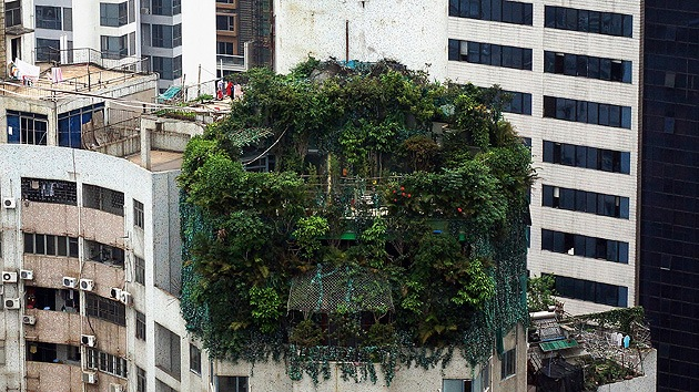 Fotos: Oculta la construcción de dos pisos adicionales en su ático plantando árboles