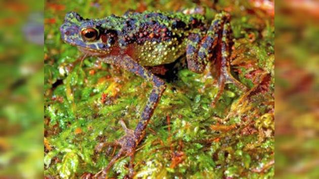 Una especie reaparece casi un siglo después de ser vista por última vez