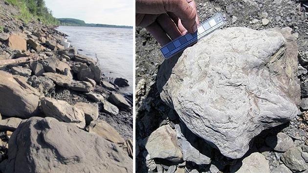 Encuentran miles de huellas de dinosaurios en el Ártico