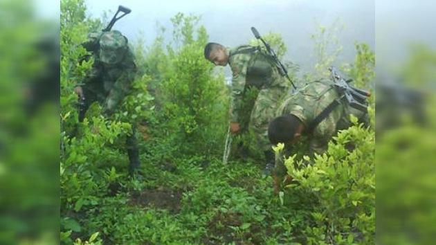 La erradicación de coca en Colombia no alcanza la meta del Gobierno