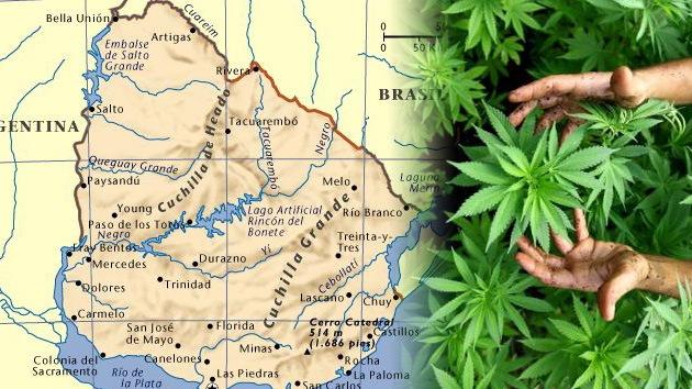 Gobierno uruguayo envía al Parlamento proyecto de ley para legalizar la marihuana