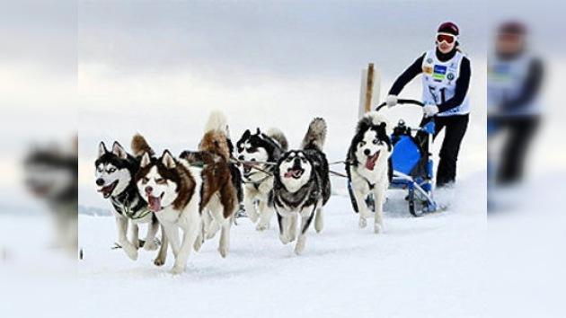 Comienza en Chukotka la carrera de trineos de perros más larga  de Euroasia