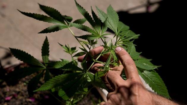 Se busca experto en marihuana: razón en el gobierno de Washington