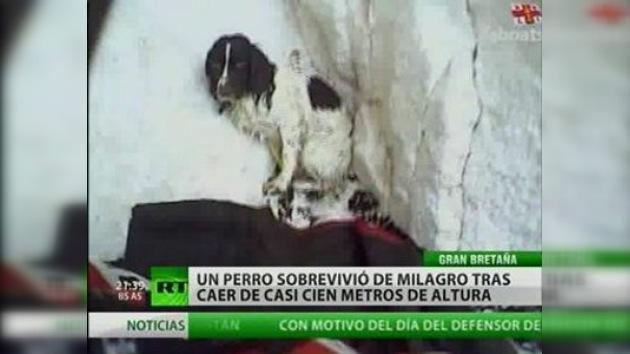Un perro sale vivo tras caer de un acantilado de casi 100 metros de altura