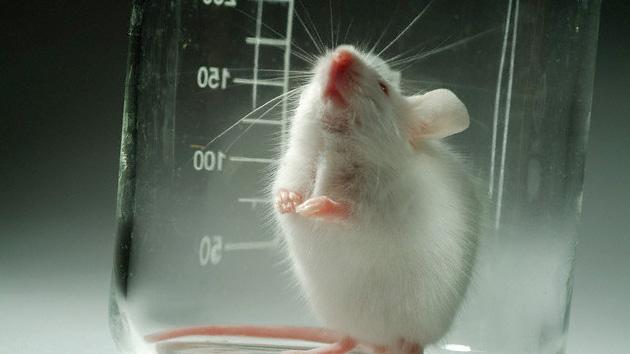 Os primeiros passos para o tratamento de autismo em ratos