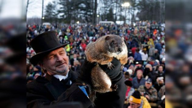 La mayoría de marmotas rusas no celebrará la fiesta norteamericana
