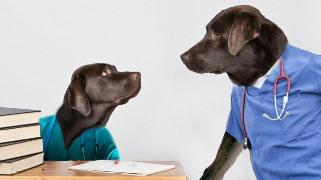 Doctores perros: Un hospital cuenta con dos labradores para olfatear el cáncer
