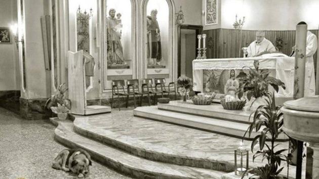 Fiel hasta el fin: Muere el perro que asistía a diario a misa en busca de su dueña fallecida