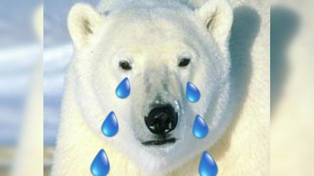 El cambio climático amenaza a los tigres, los osos polares y el atún rojo