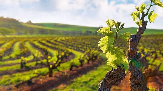 Un viticultor francés puede ir a la cárcel por negarse a usar pesticidas