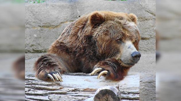 Dan por desaparecido al último ejemplar de osos autóctonos de los Pirineos