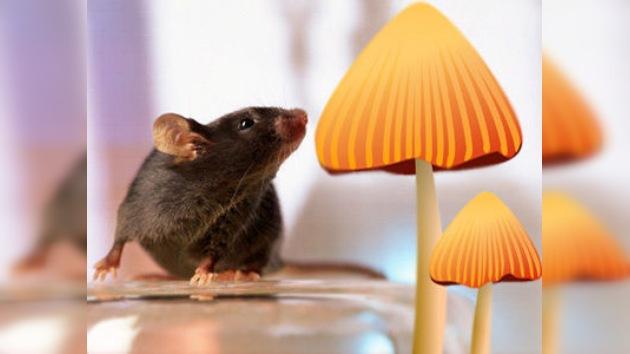 Unos hongos chinos podrían ayudar a curar el cáncer