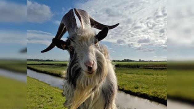 Las cabras prohibidas de la Reserva Natural del río Setún