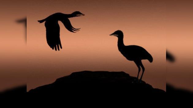 Aves gigantes, coetáneas de los dinosaurios