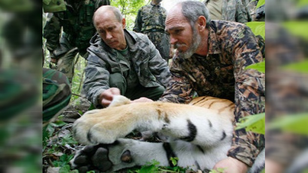 "La  tigresa ""extraviada"" de Putin dio a luz a un cachorro"