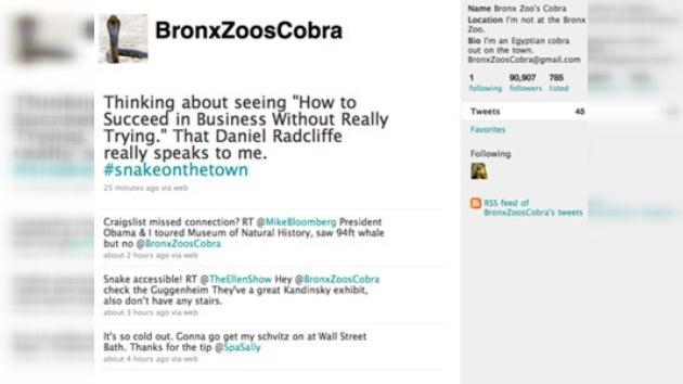Venenosa serpiente fugitiva en Nueva York tiene su propio Twitter