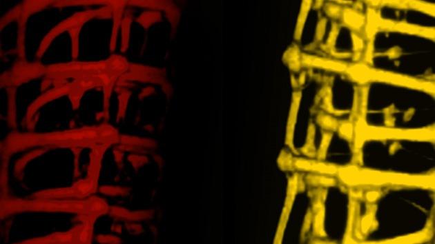 Las células se 'lían' con nanocables: ¿germen de la creación masiva de robots?