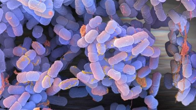 'Vida extraterrestre' en la Tierra: Encuentran bacterias 'cósmicas' en Siberia