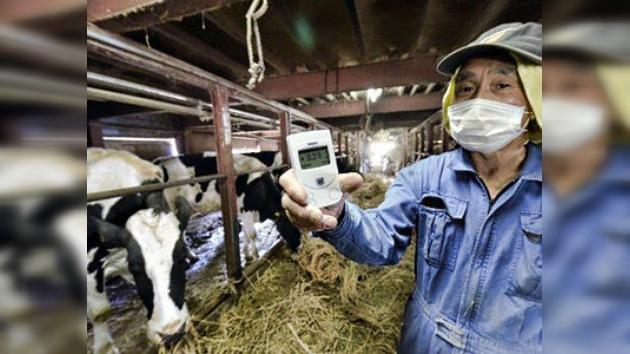 648 vacas fueron alimentadas con pienso radiactivo en Japón