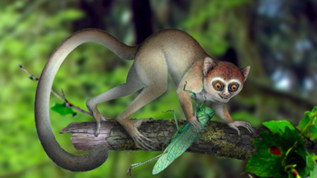 Hallan el fósil del primate más antiguo hasta la fecha