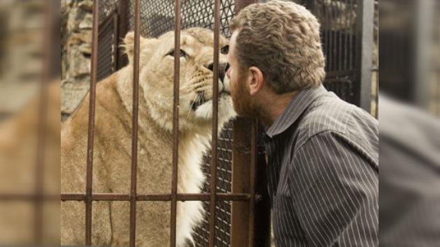 35 días viviendo enjaulado con leones en Ucrania