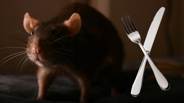 Dieta de ratas: artista de EE.UU. ofrece una clase de supervivencia en tiempos de crisis