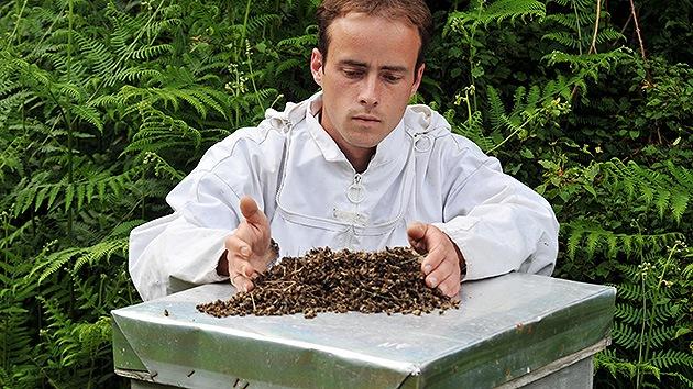 La UE alerta: Dos plaguicidas amenazan a las abejas... y a los humanos