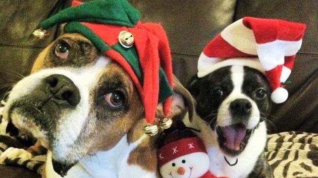 Un perro enfermo terminal completa una lista adorable de cosas antes de morir