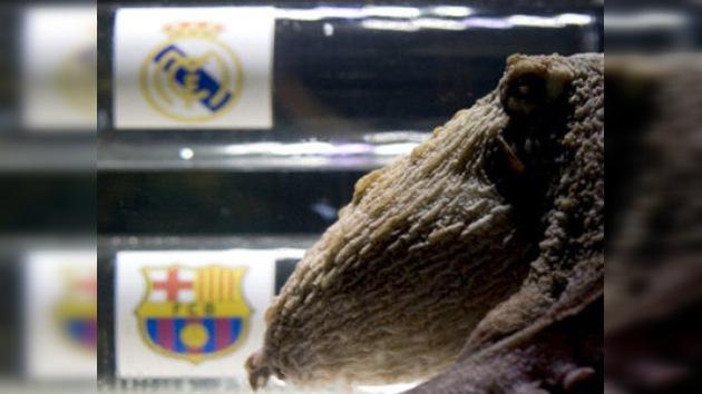 Nuevo pulpo profeta apuesta por el Real Madrid