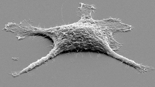 Crean una célula 'zombi' más resistente que las vivas
