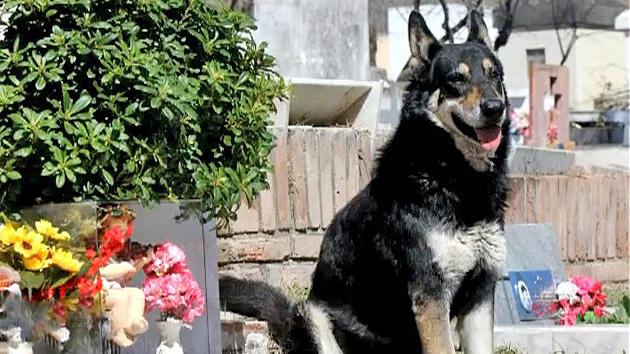 Argentina: un perro acompaña fielmente a su amo... en el cementerio