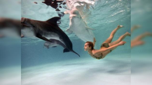 La delfinoterapia ayuda a los estresados habitantes de las grandes urbes