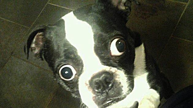 Un perro con ojos de récord