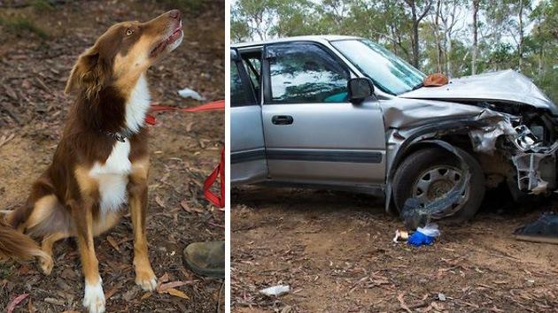 Australiano se salva gracias a su perro de morir de frío tras pasar cuatro días atrapado
