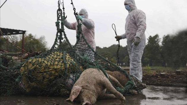 ´Pescador de cerdos muertos´, nueva profesión en alrededores de un río en China