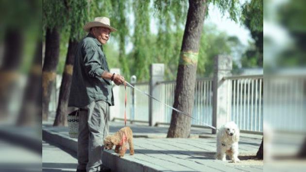 La ciudad china de Jiangmen, en guerra contra los perros