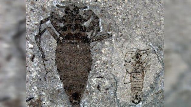 Los dinosaurios tenían pulgas del tamaño de balas