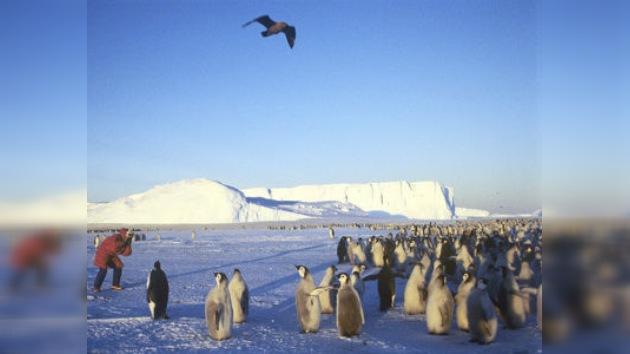 ¿Qué hacen los científicos en la Antártida?