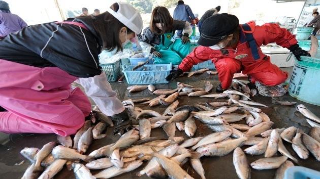 Detectan peces con alto nivel de cesio radioactivo en Japón