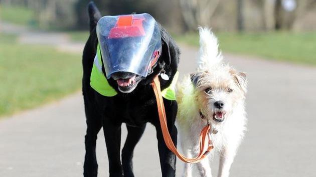 Video: Un perro se convierte en el guía de su amigo canino ciego