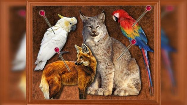 Cayó una red de tráfico de animales disecados