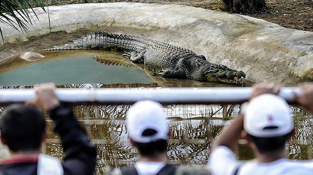 VIDEO: El cocodrilo más grande del planeta vive en Filipinas