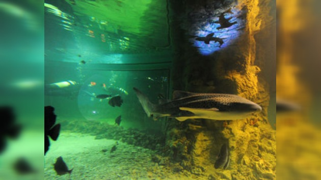 Tiburones y anacondas, nuevos vecinos de Moscú