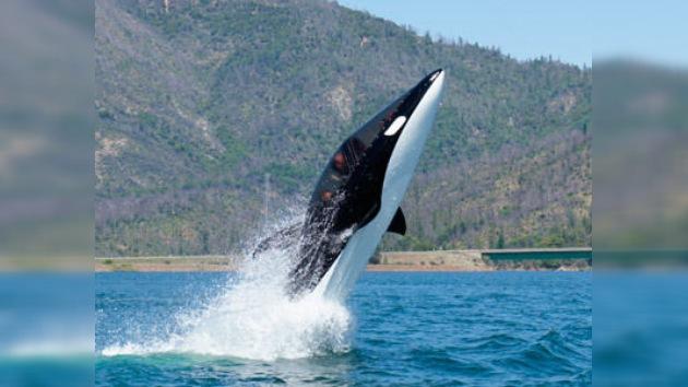 La 'Lancha Orca' da el salto al mercado