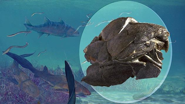 Hallan en China los restos del pez más antiguo