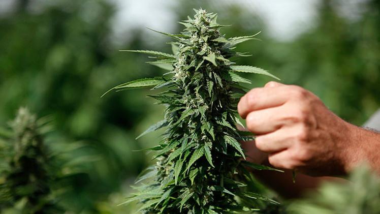 Las tribus nativas de EE.UU. podrán vender y cultivar marihuana